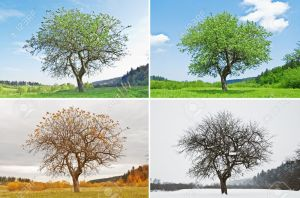 4377858-alone-tree-in-for-season-Stock-Photo-seasons-four-tree